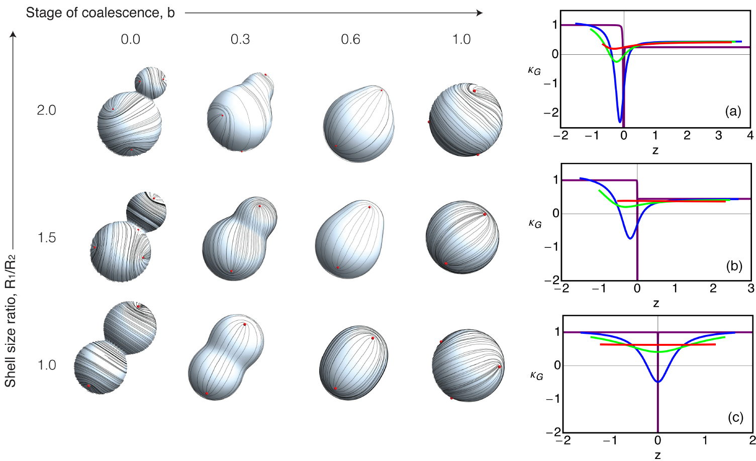 FIG. 1. Left: Defect arrangement on the doublet during coalescence; r = R1/R2 is the spheres' relative size, and b is the stage of coalescence. For larger values of r, the defect arrangement becomes asymmetric with more defects located on the side with smaller Gaussian curvature. Red dots indicate the positions of the defects. Right: For each shell size ratio on the left [(a):r = 2, (b):r = 1.5, and (c): r = 1], the Gaussian curvatures corresponding to different stages are plotted as a function of z: purple (b = 0), blue (b = 0.3), green (b = 0.6), and red (b = 1).