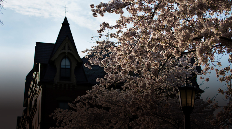 Cherry trees blooming in front of Bendetson Hall (Alonso Nichols/Tufts University)