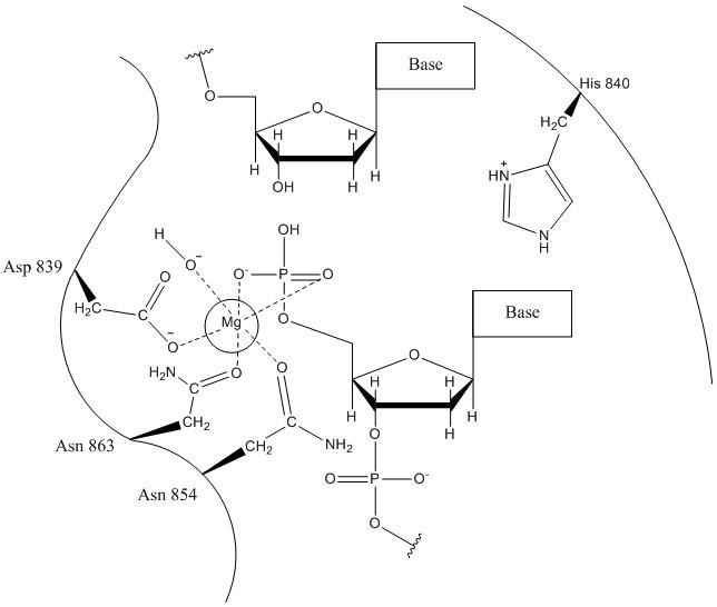 HNH Mechanism 2