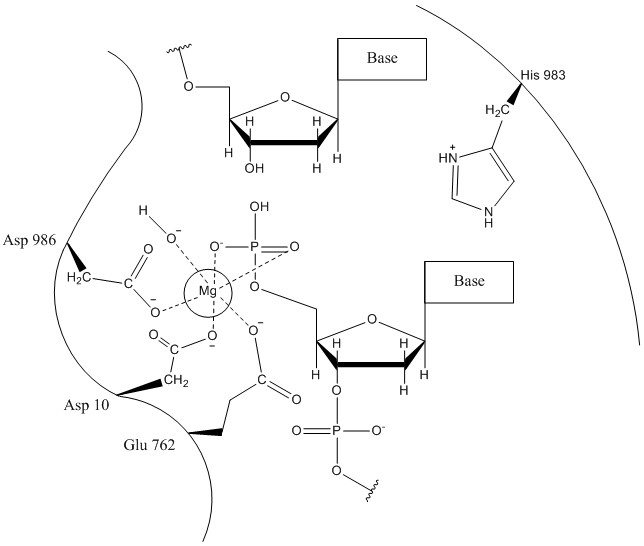 RuvC mechanism 2