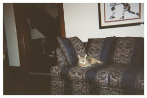 Phoenix, Rubin Carter's cat, at his home at 155 Delaware Ave in Toronto, Canada. MS226.006.013.00007