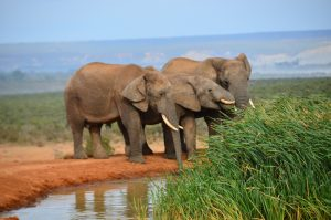 The Elephant-Human Relations Aid Program: Projects and Empathy for a Neighborhood of Friends