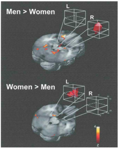 Hemispheric Lateralization of Amygdala Activity During Successful Recall of Emotional Memory [Credit: Canli et al. (2002)]