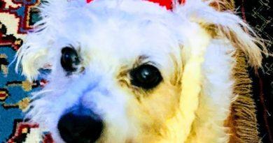Murray in a Santa hat
