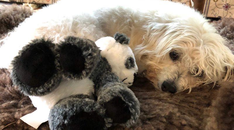 Murray and stuffed panda