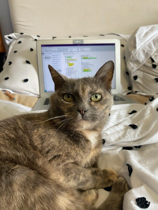 Gioia's cat