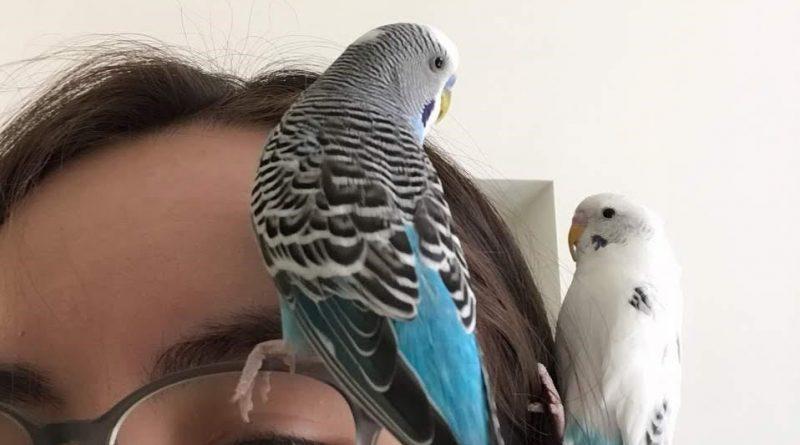 Rita and her birds