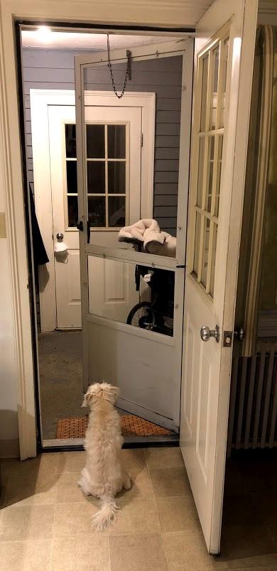 Murray the dog sitting in doorway