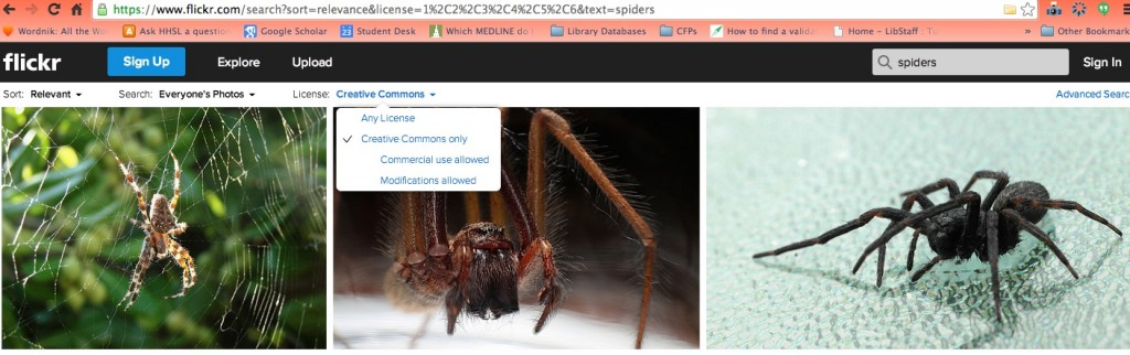 Flickr_spiders