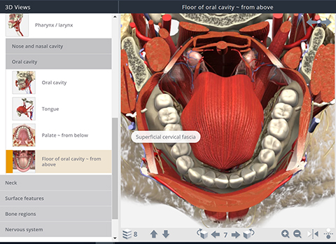 Screenshot of oral cavity in Anatomy TV interface