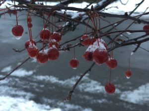 cherries with snow