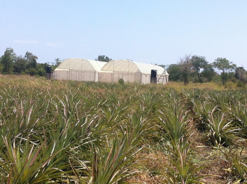 EA_Greenhouses
