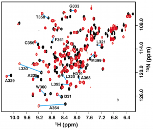 Figure 1. 1H-15N 2D spectrum of BPV-1 E2 DBD (310-410). Resonances of the DNA-bound protein (red) show chemical shift differences relative to the DNA-free sample (black) (taken from Veeraraghavan et al. Biochemistry (1999) 38: 16115-16124).