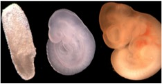 Source - MMCRI transgenic core