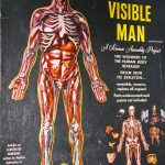 Blueprints for the Human Body