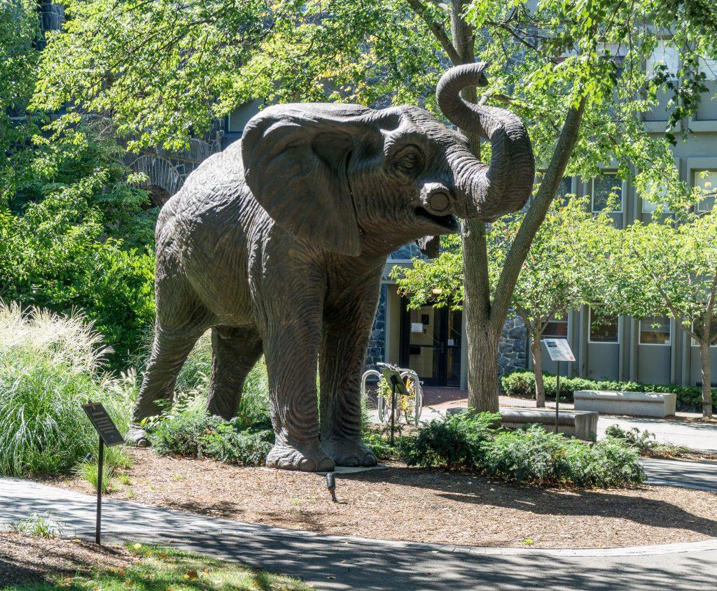 Jumbo statue (of an elephant) at Tufts University