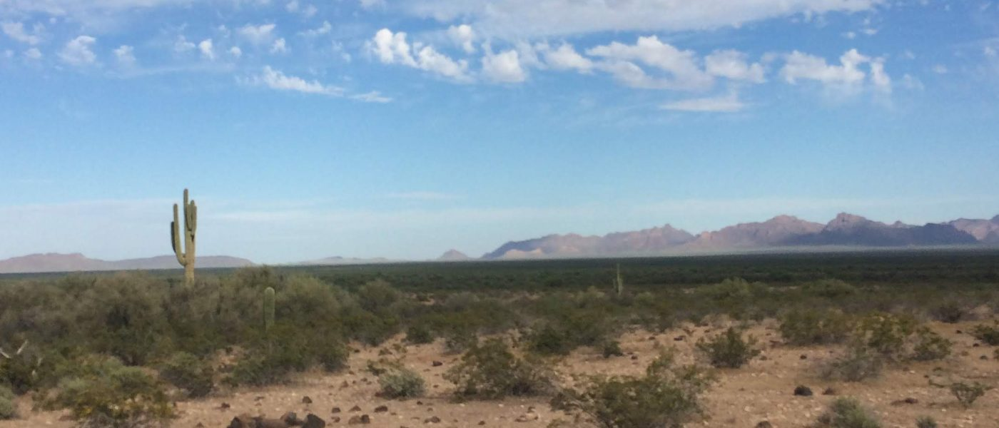 Indigenous Tongues in the Sonoran Desert