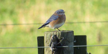 Avian Club Bird Watching 2020