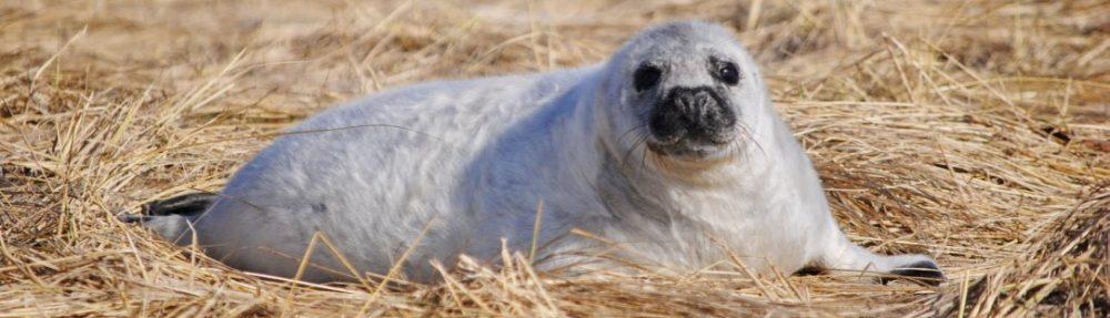 Viral Ecology of Marine Mammals