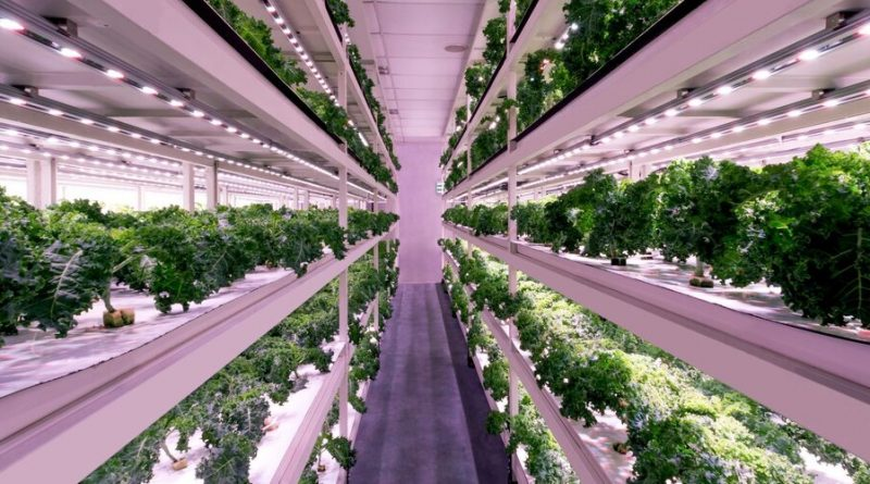 SWFs Allocated Nearly $1.2 Billion to Food Tech Companies Between 2019 and 2020, Data Show