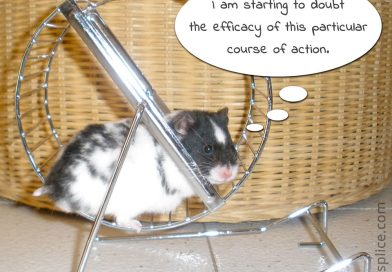 We Teach Humans, Not Content: Stepping off the Hamster Wheel