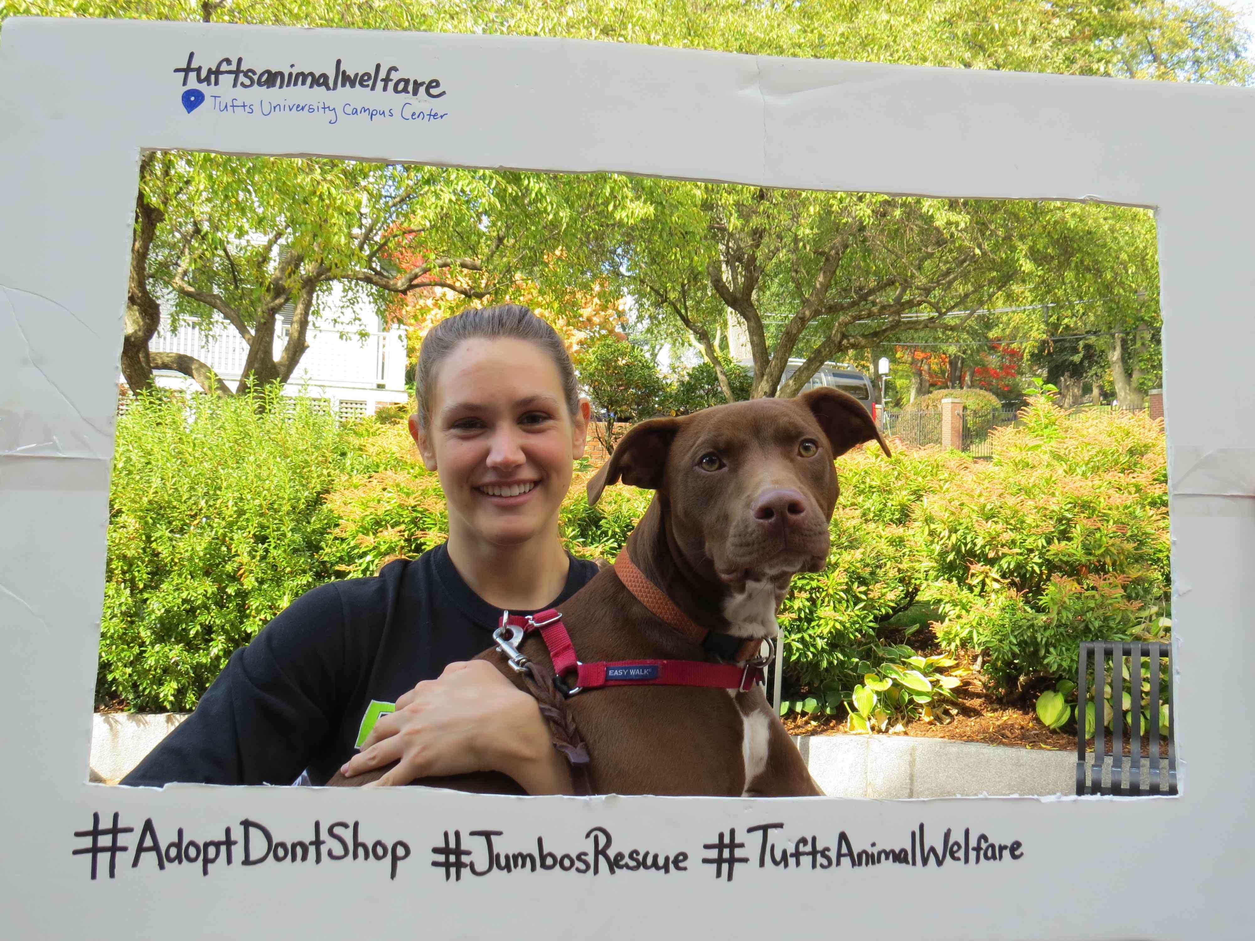 Social Media Campaign #adoptdontshop