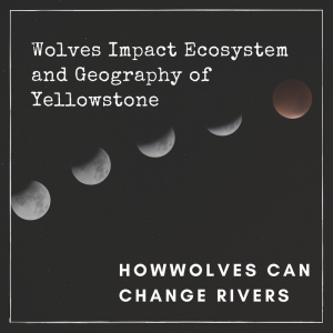Wolves Impact Ecosystem and Geography of Yellowstone Title Image, background has phases of moon cycle.