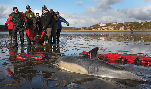 nouveau style de fournir beaucoup de dernière mode Cummings Veterinary Medicine   Dolphin Rescuers